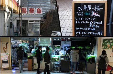 東京都内のアクアリウムショップ