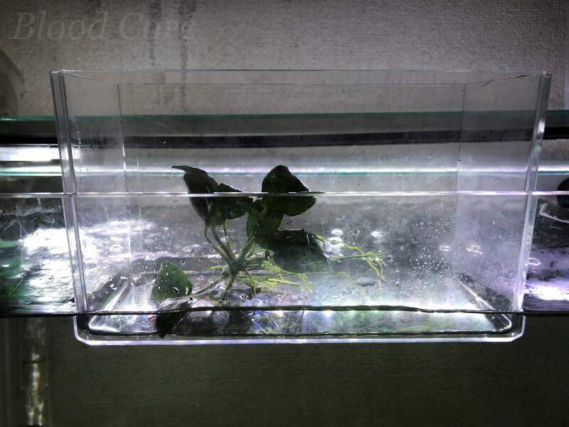 水草の温度合わせ