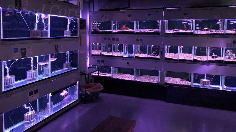 トロピランド小平店の熱帯魚売り場