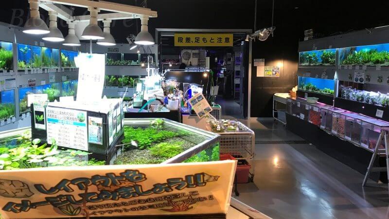 トロピランド小平店の水草コーナー